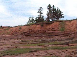 Nous pouvons voir que la couche de sol est formée sur le dessus de celui-ci, donc nous savons qu'un certains laps de temps c'est écoulé depuis que ces couches ont été fixé par les eaux des crues.